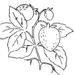 Ausmalbild Erdbeere 25 zum Ausdrucken