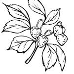 Ausmalbilder Erdbeere 6 kostenlos