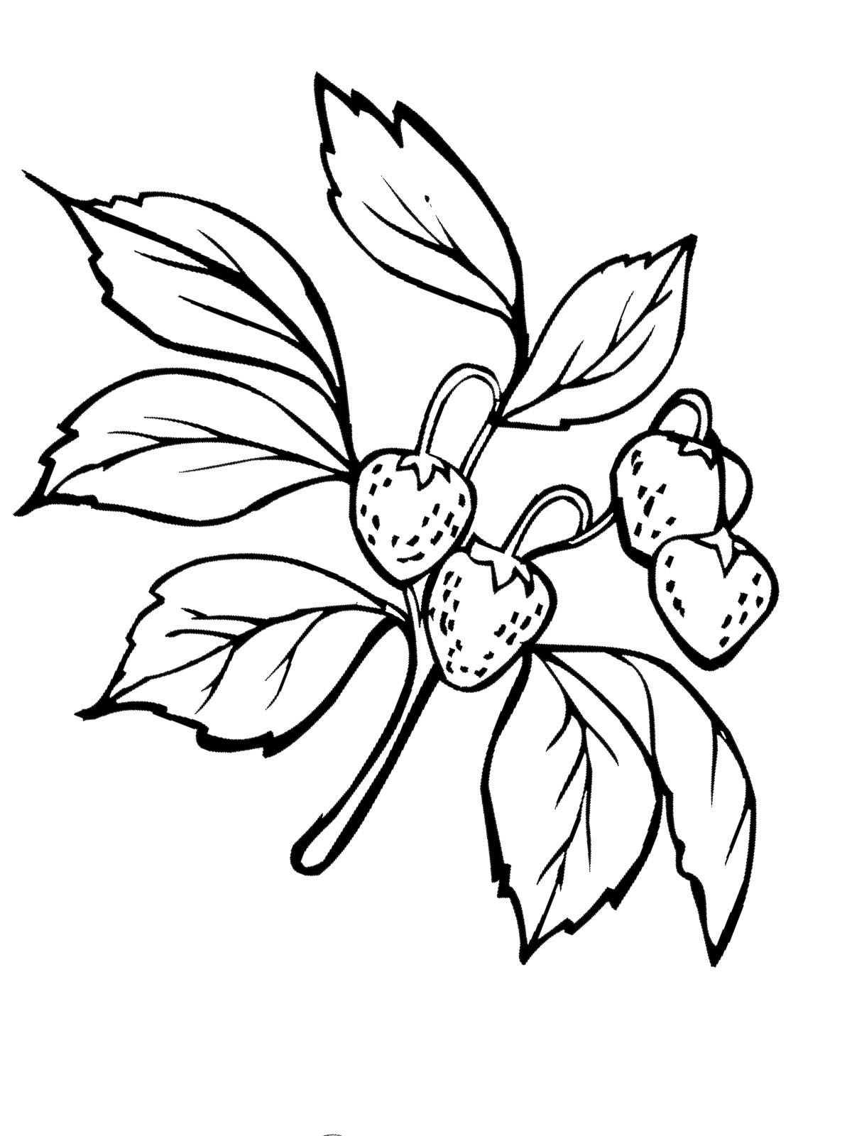 Tolle Erdbeer Malvorlagen Fotos - Malvorlagen Von Tieren - ngadi.info