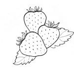 Malvorlage Erdbeere 28 zum Ausdrucken