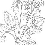 Malvorlage Erdbeere 29 zum Ausdrucken