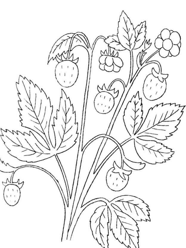 malvorlage erdbeere 29 zum ausdrucken  märchen aus aller