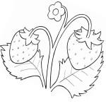Malvorlage-Erdbeere 30 zum Ausdrucken