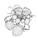 Malvorlagen Erdbeere 11 kostenlos