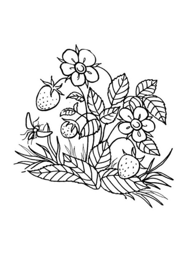 malvorlagen erdbeere 12 kostenlos  märchen aus aller welt