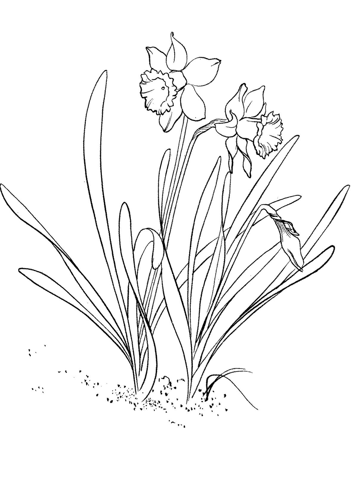 Ausmalbilder, Malvorlagen von Frühling kostenlos zum Ausdrucken
