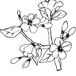 Malvorlagen Frühling 17 kostenlos