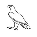 Adler 11