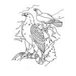 Adler 4
