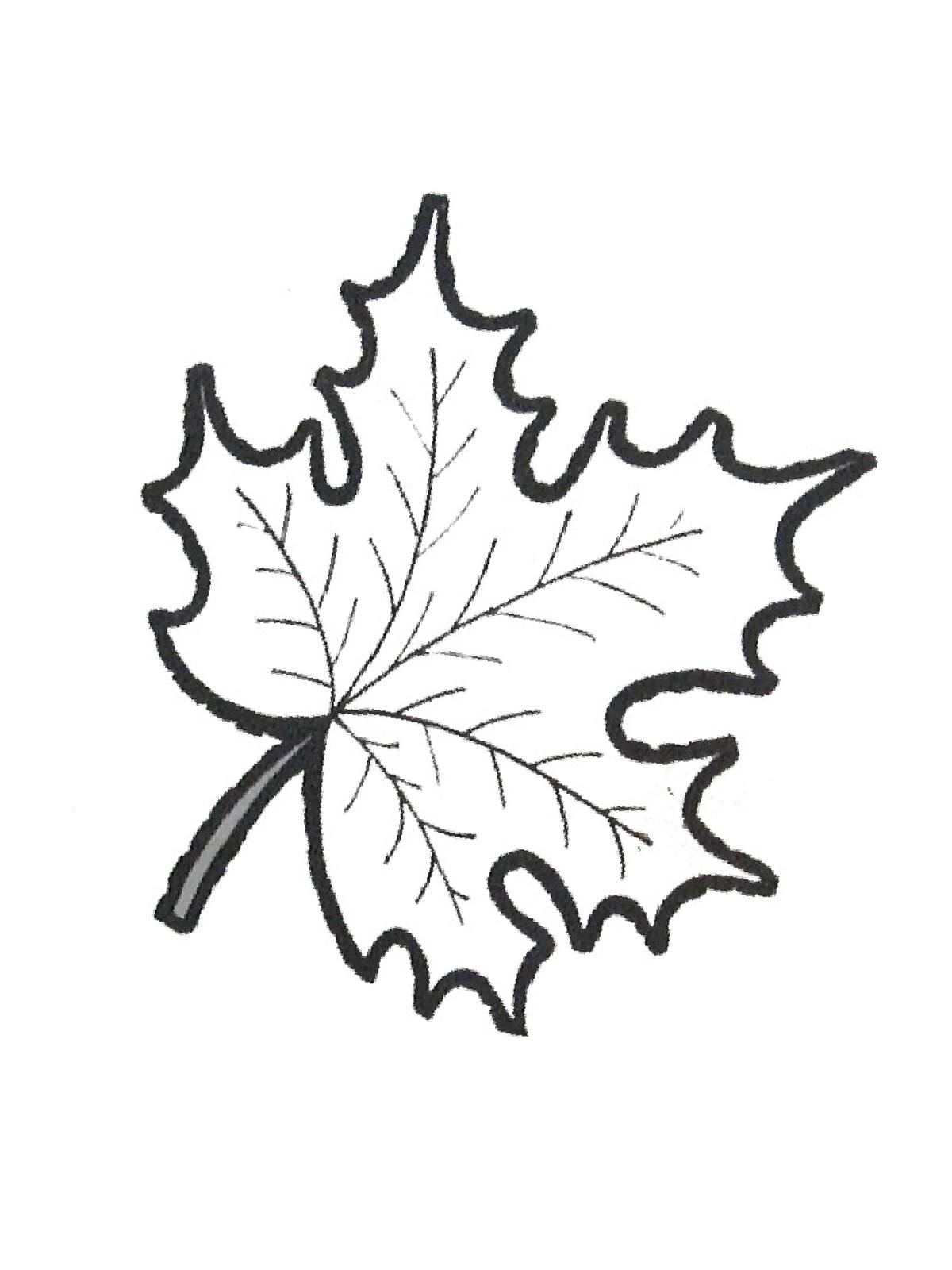 ausmalbilder malvorlagen von ahornblatt kostenlos zum
