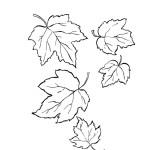 Ahornblatt 4