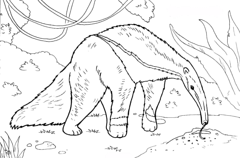 Malvorlage Ameisenbär  Coloring and Malvorlagan