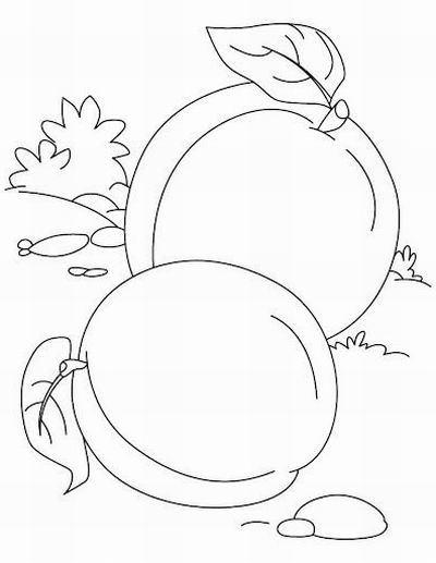 Ausmalbilder, Malvorlagen – Aprikose kostenlos zum Ausdrucken ...