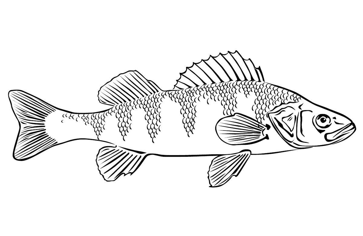 19 new ausmalbilder erwachsene fische