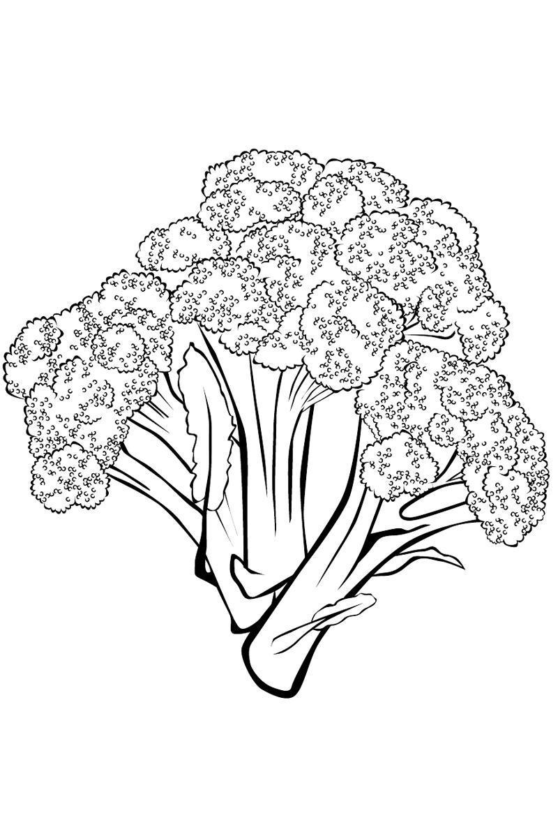 ausmalbilder malvorlagen  brokkoli kostenlos zum