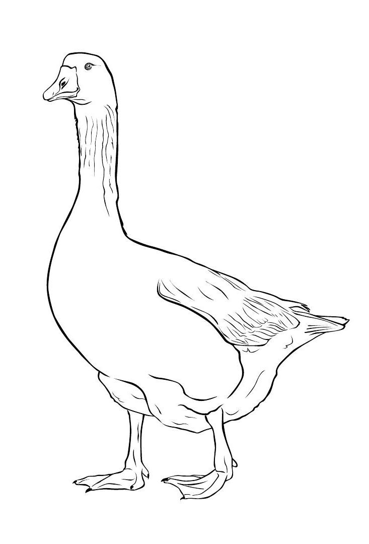 HD wallpapers rhode island coloring pages