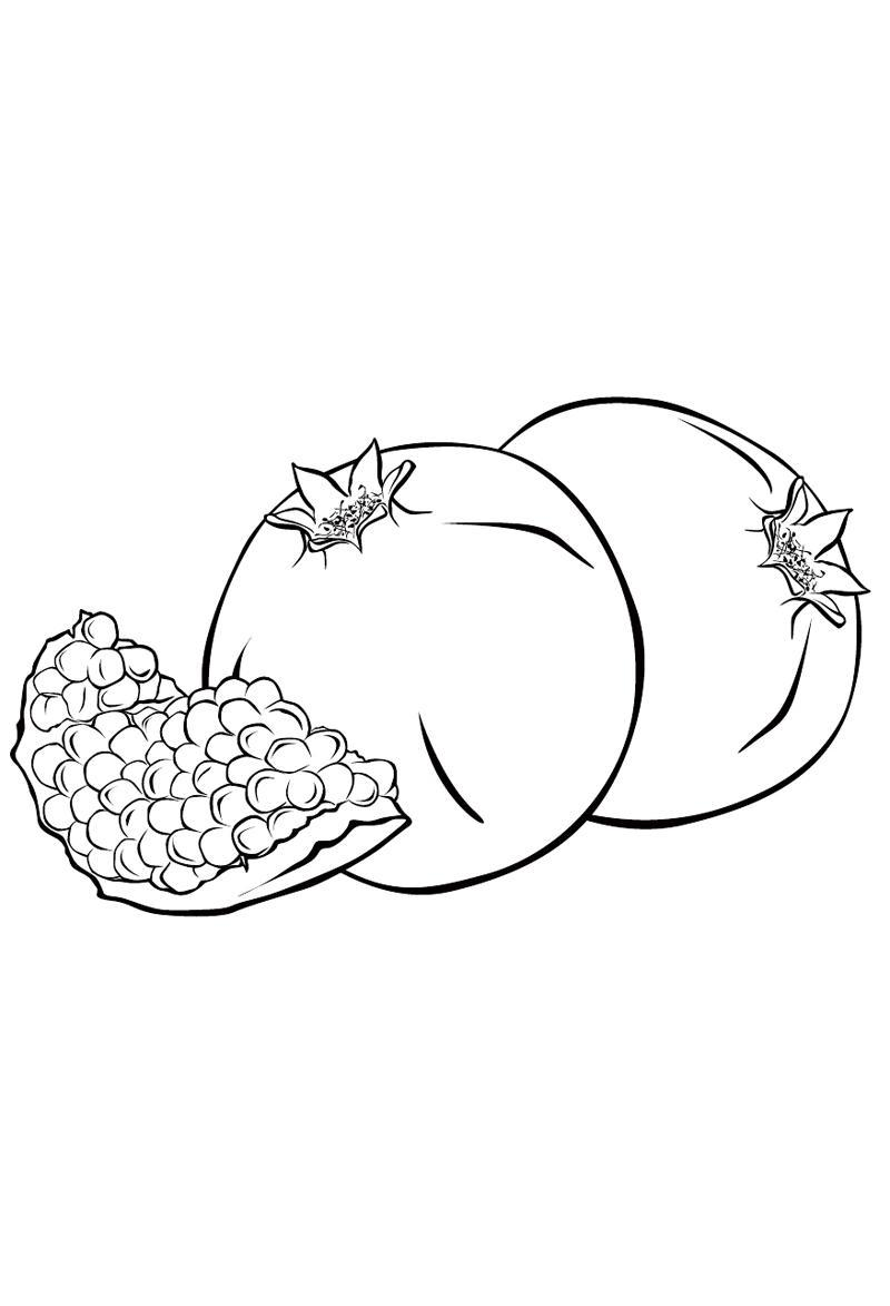 Ausmalbilder, Malvorlagen – Granatapfel kostenlos zum Ausdrucken ...