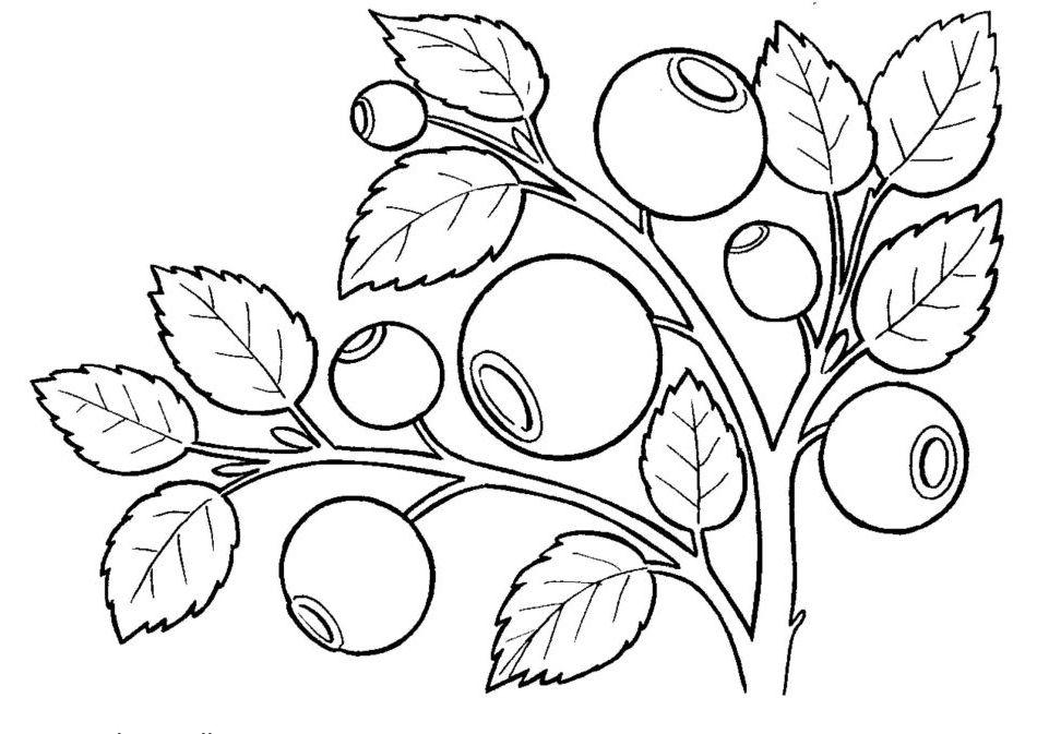 heidelbeere malvorlage  coloring and malvorlagan