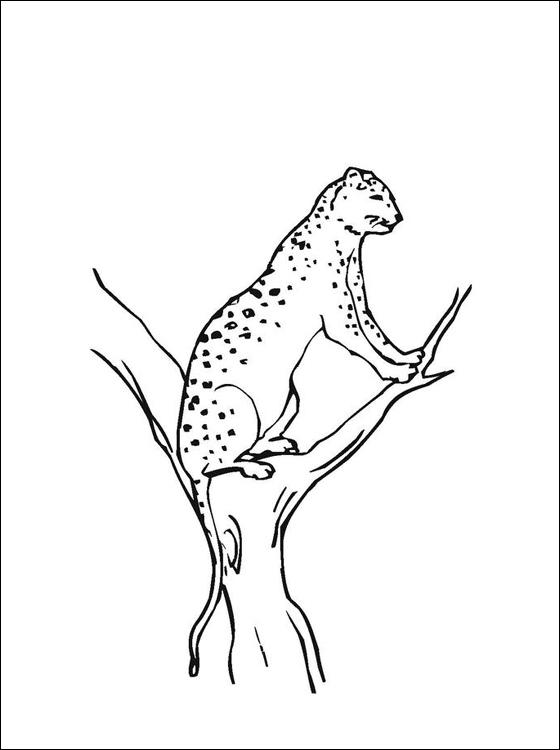 Ausmalbilder Malvorlagen Jaguar Kostenlos Zum Ausdrucken