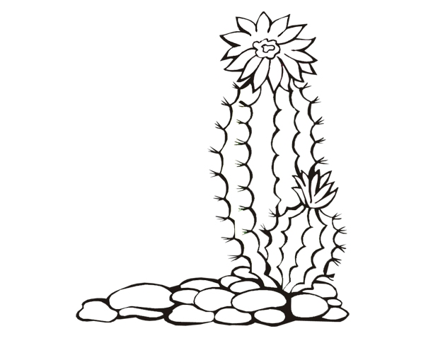 Ausmalbilder, Malvorlagen – Kaktus kostenlos zum Ausdrucken ...