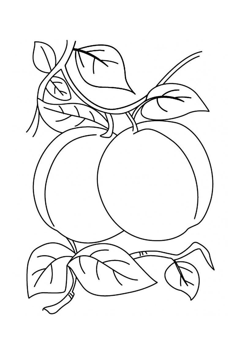 ausmalbilder malvorlagen pfirsich kostenlos zum