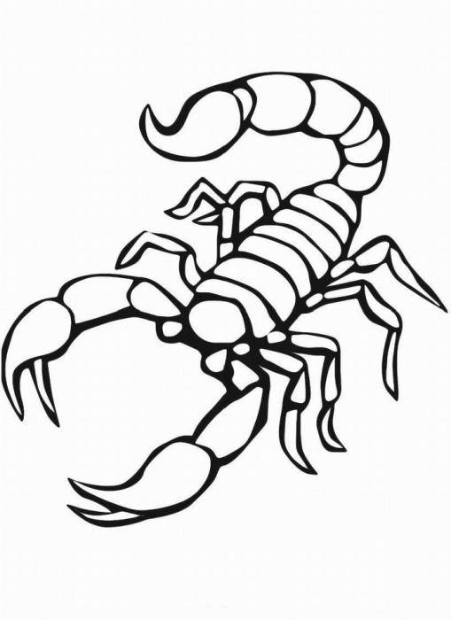 ausmalbilder, malvorlagen - skorpion kostenlos zum